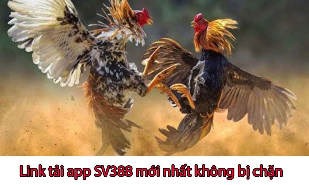 Link tải app SV388 mới nhất 2020