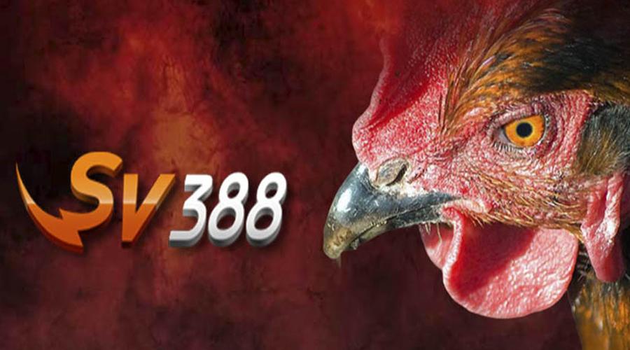 Đăng ký SV388 đá gà trực tuyến uy tín nhất hiện nay