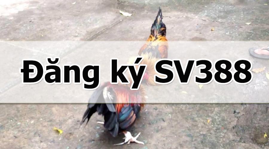 Những lưu ý khi tạo tài khoản SV388 chơi đá gà